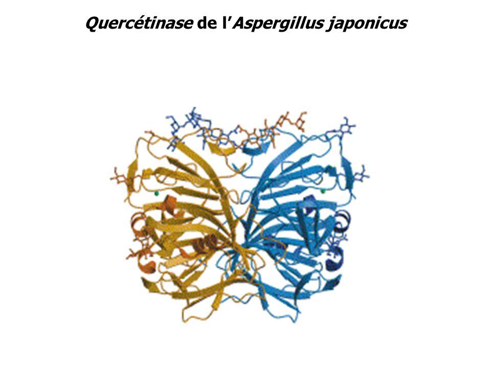 Quercétinase de lAspergillus japonicus