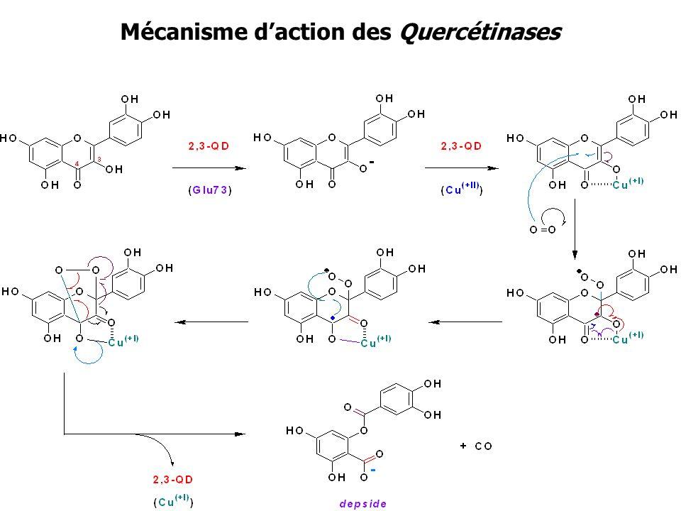 Mécanisme daction des Quercétinases