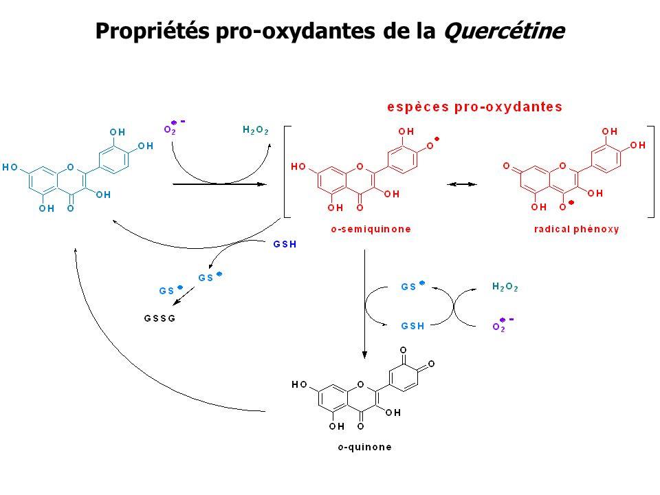 Propriétés pro-oxydantes de la Quercétine