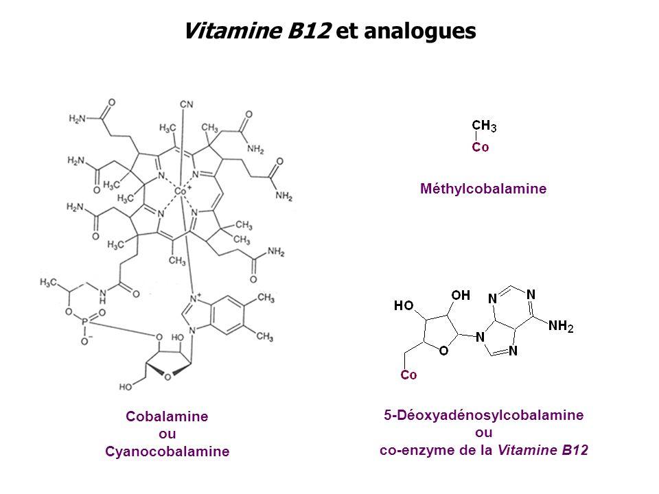 Vitamine B12 et analogues Cobalamine ou Cyanocobalamine Méthylcobalamine 5-Déoxyadénosylcobalamine ou co-enzyme de la Vitamine B12