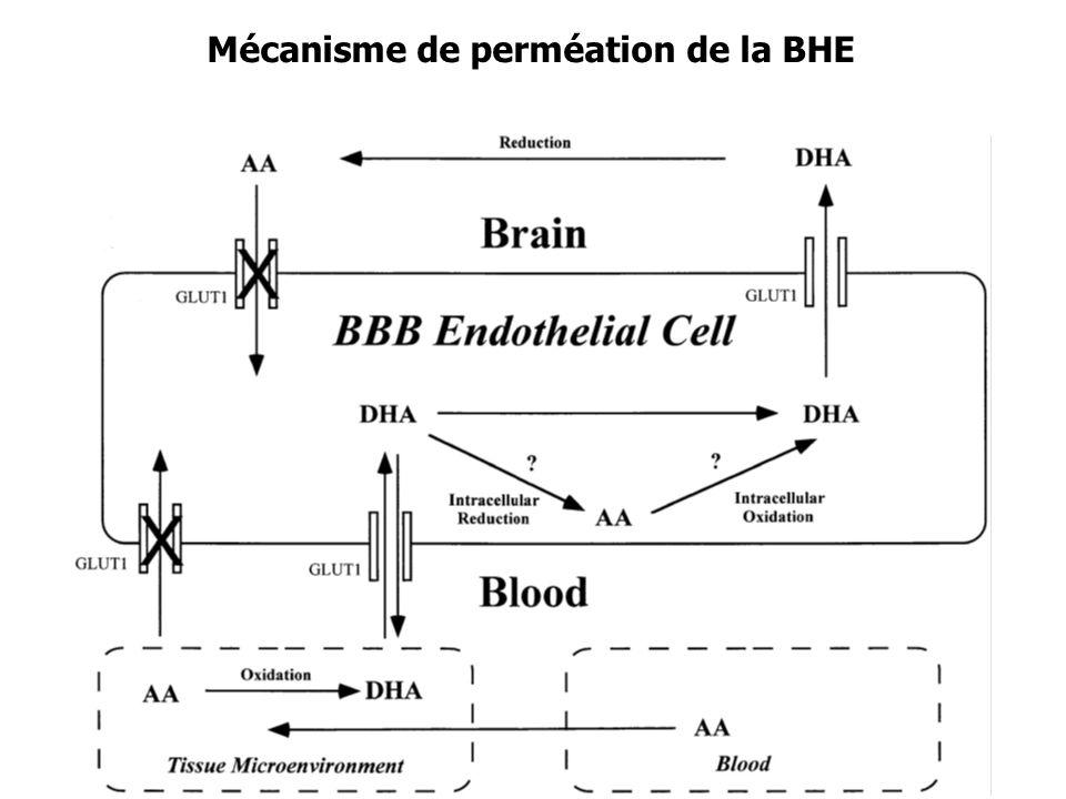 Mécanisme de perméation de la BHE