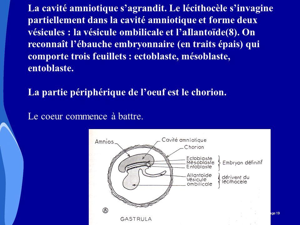 CHU _Hôpitaux de Rouen - page 19 La cavité amniotique sagrandit. Le lécithocèle sinvagine partiellement dans la cavité amniotique et forme deux vésicu