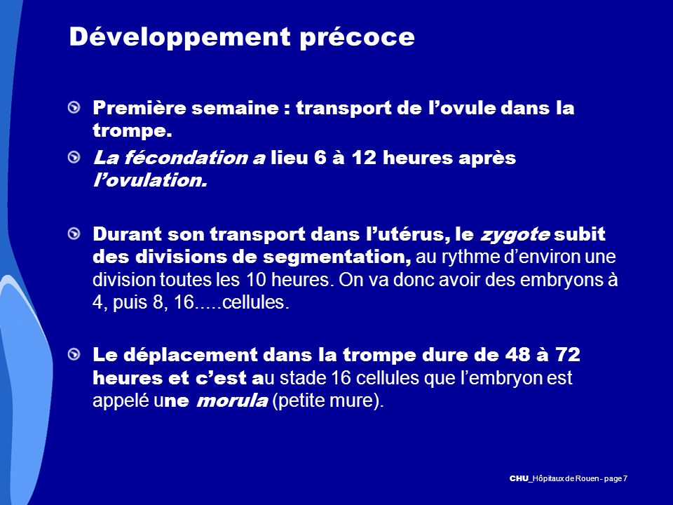 CHU _Hôpitaux de Rouen - page 7 Développement précoce Première semaine : transport de lovule dans la trompe. La fécondation a lieu 6 à 12 heures après