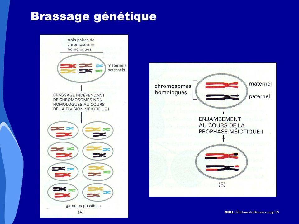 CHU _Hôpitaux de Rouen - page 13 Brassage génétique