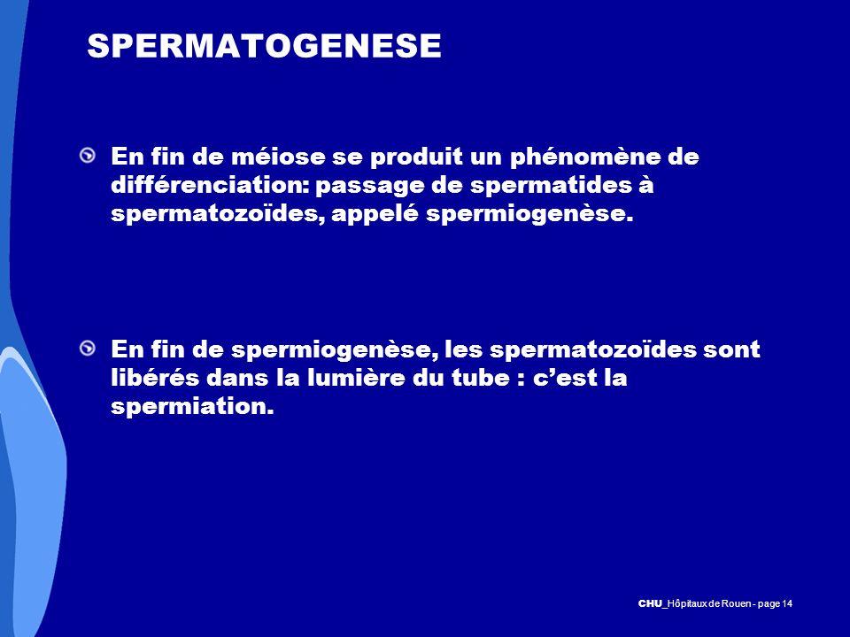 CHU _Hôpitaux de Rouen - page 14 SPERMATOGENESE En fin de méiose se produit un phénomène de différenciation: passage de spermatides à spermatozoïdes,