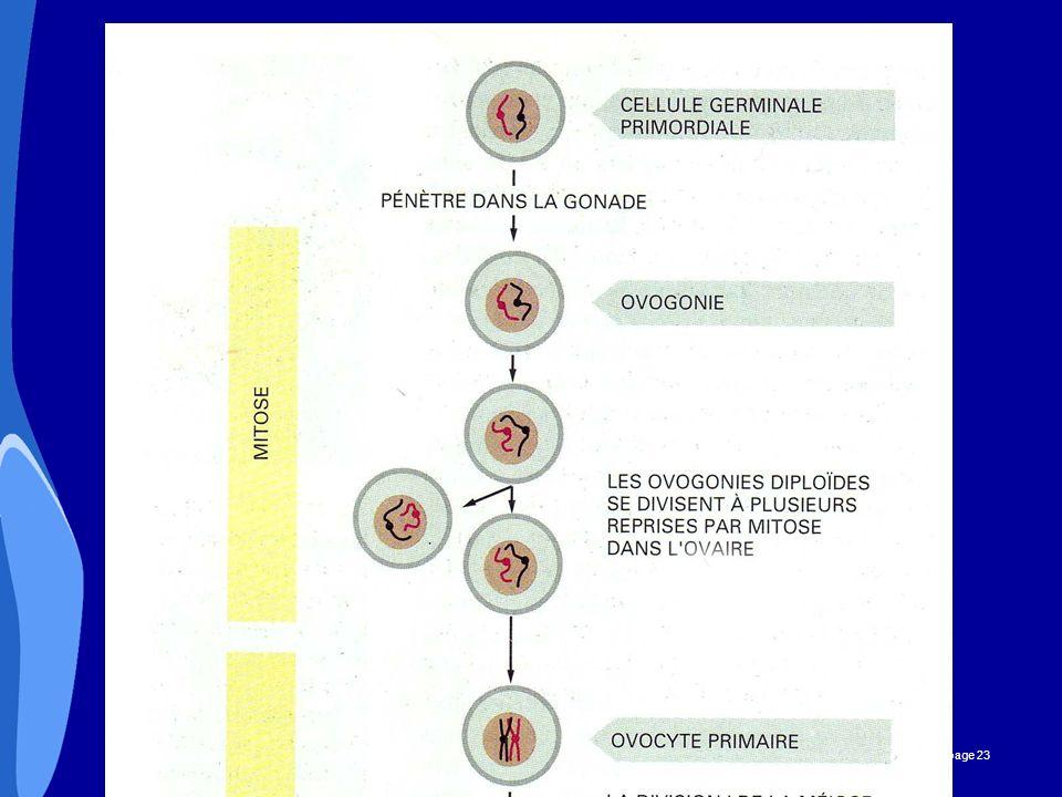 CHU _Hôpitaux de Rouen - page 23 OVOGENESE
