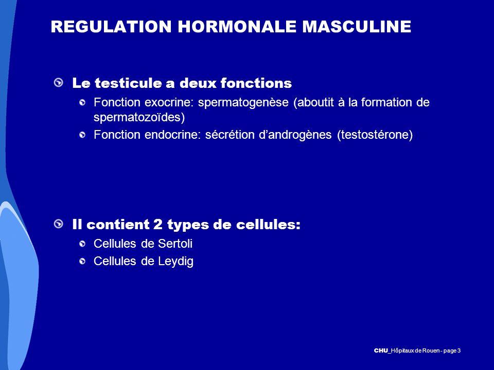 CHU _Hôpitaux de Rouen - page 3 REGULATION HORMONALE MASCULINE Le testicule a deux fonctions Fonction exocrine: spermatogenèse (aboutit à la formation