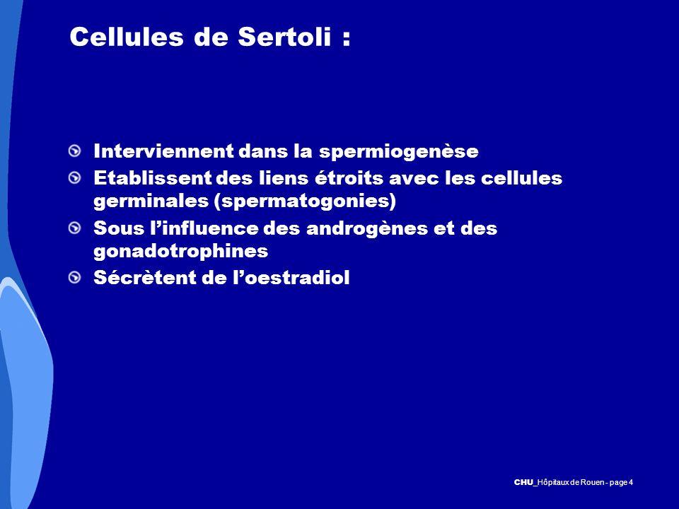 CHU _Hôpitaux de Rouen - page 4 Cellules de Sertoli : Interviennent dans la spermiogenèse Etablissent des liens étroits avec les cellules germinales (
