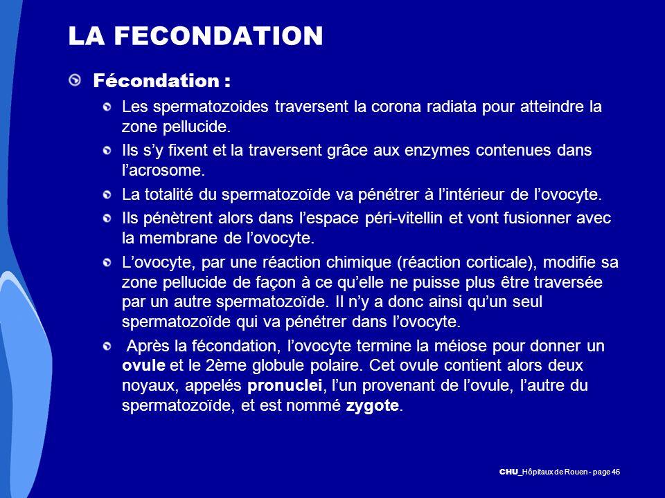 CHU _Hôpitaux de Rouen - page 46 LA FECONDATION Fécondation : Les spermatozoides traversent la corona radiata pour atteindre la zone pellucide. Ils sy