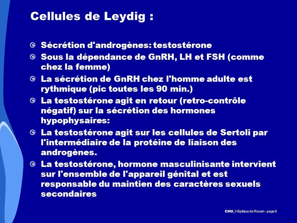 CHU _Hôpitaux de Rouen - page 6 Cellules de Leydig : Sécrétion d'androgènes: testostérone Sous la dépendance de GnRH, LH et FSH (comme chez la femme)