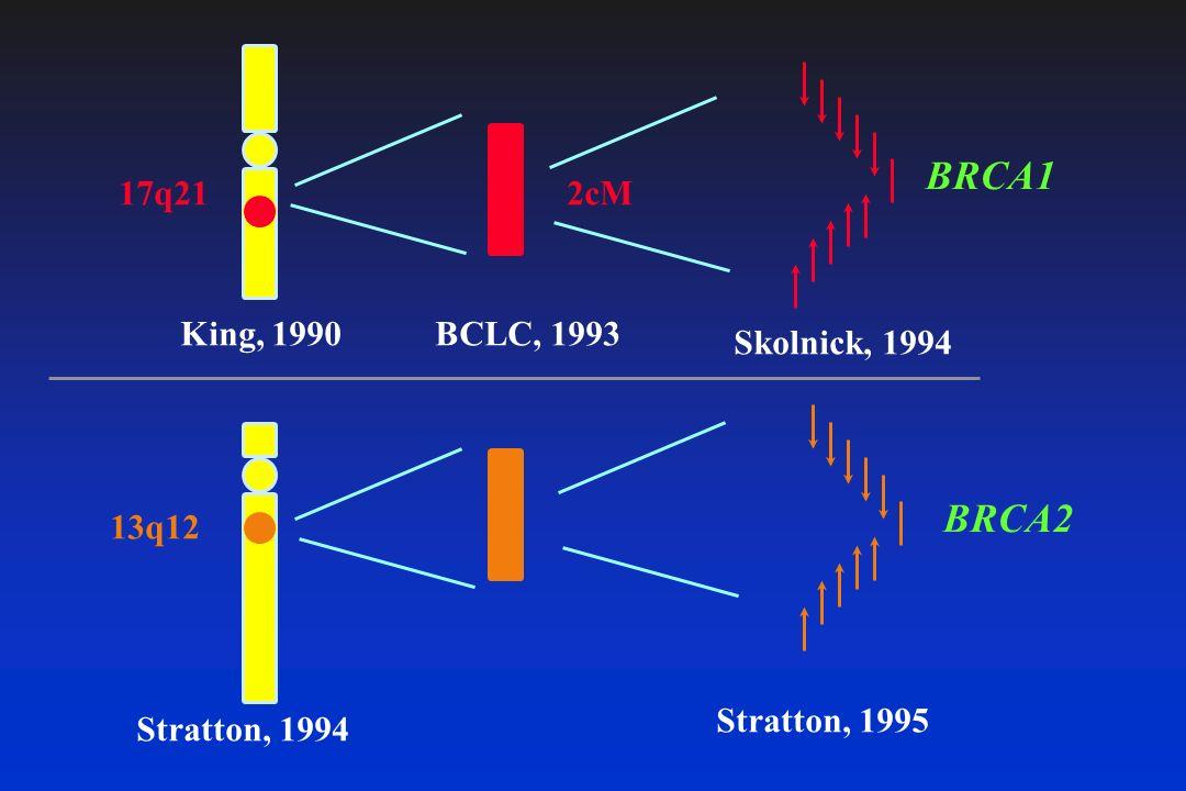 17q21 13q12 BRCA2 BRCA1 King, 1990 Stratton, 1994 BCLC, 1993 Skolnick, 1994 Stratton, 1995 2cM