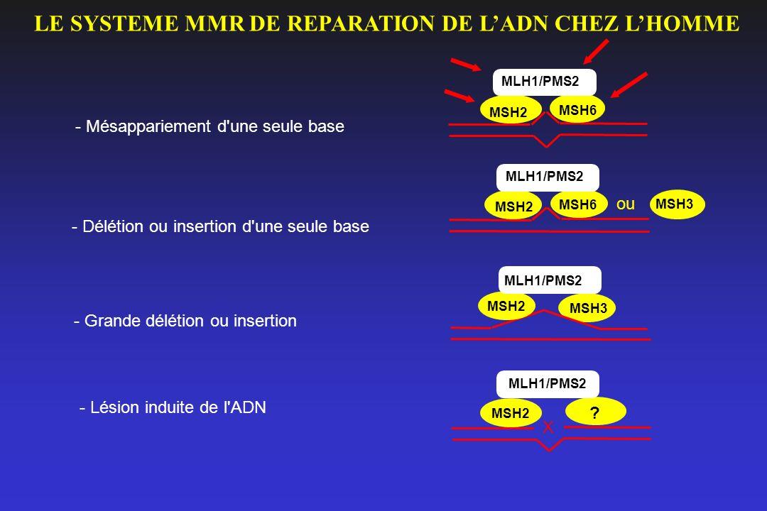 MSH2 MSH6 MLH1/PMS2 MSH2 MSH6 MLH1/PMS2 MSH2 MSH3 MLH1/PMS2 MSH2 MLH1/PMS2 X - Mésappariement d'une seule base - Délétion ou insertion d'une seule bas