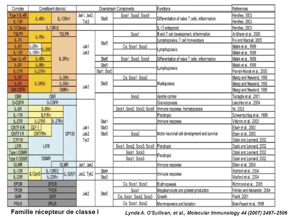 Lynda A. OSullivan, et al., Molecular Immunology 44 (2007) 2497–2506 Famille récepteur de classe I