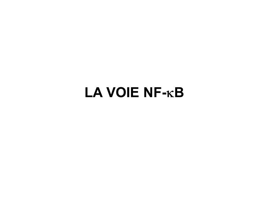 LA VOIE NF- B