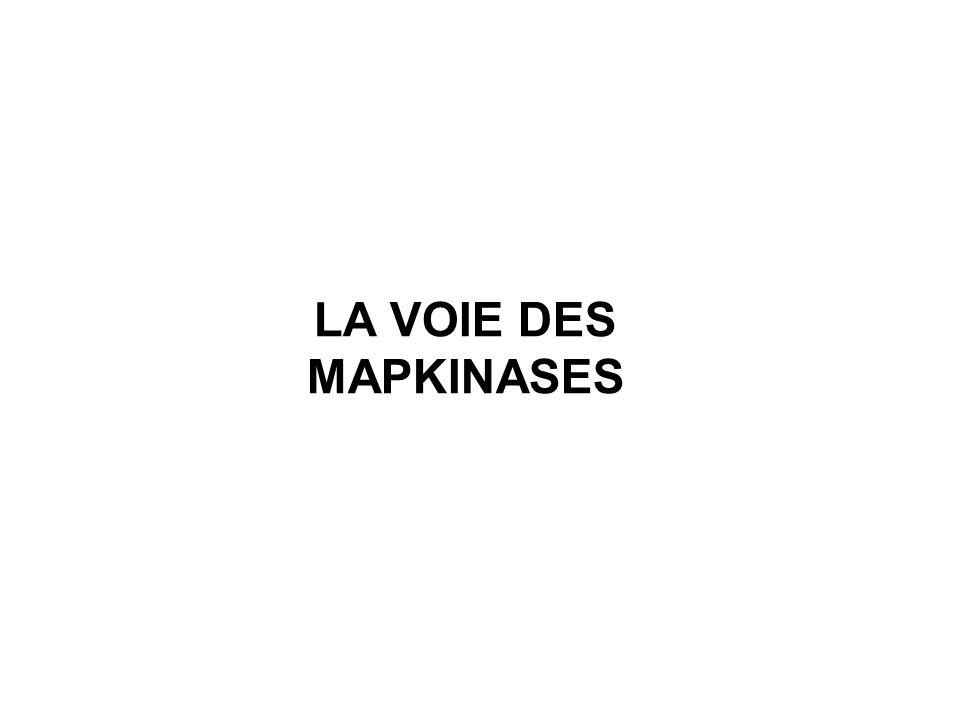 LA VOIE DES MAPKINASES