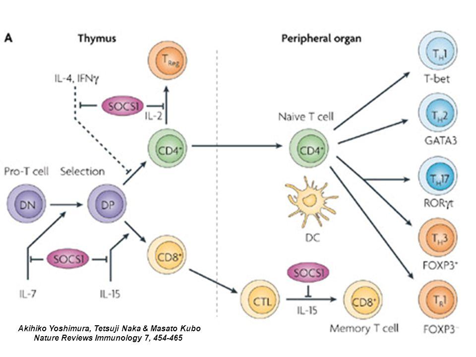 Akihiko Yoshimura, Tetsuji Naka & Masato Kubo Nature Reviews Immunology 7, 454-465