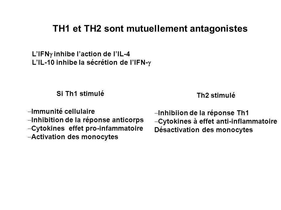 TH1 et TH2 sont mutuellement antagonistes LIFN inhibe laction de lIL-4 LIL-10 inhibe la sécrétion de lIFN- Si Th1 stimulé Th2 stimulé Immunité cellula