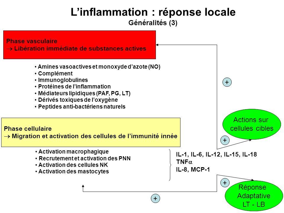 Phase vasculaire Libération immédiate de substances actives Amines vasoactives et monoxyde dazote (NO) Complément Immunoglobulines Protéines de linfla