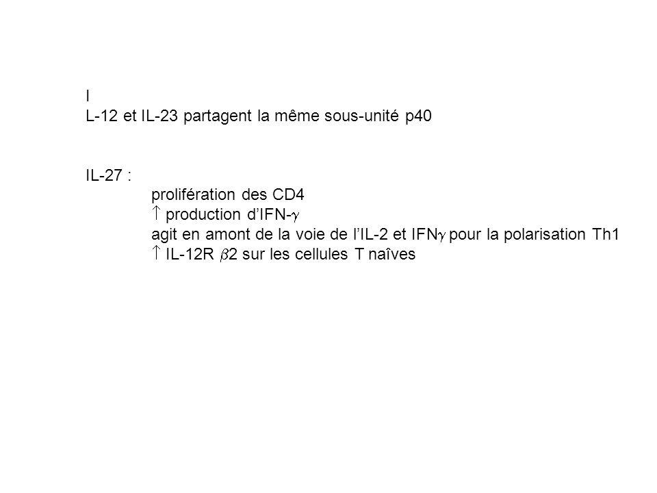 I L-12 et IL-23 partagent la même sous-unité p40 IL-27 : prolifération des CD4 production dIFN- agit en amont de la voie de lIL-2 et IFN pour la polar