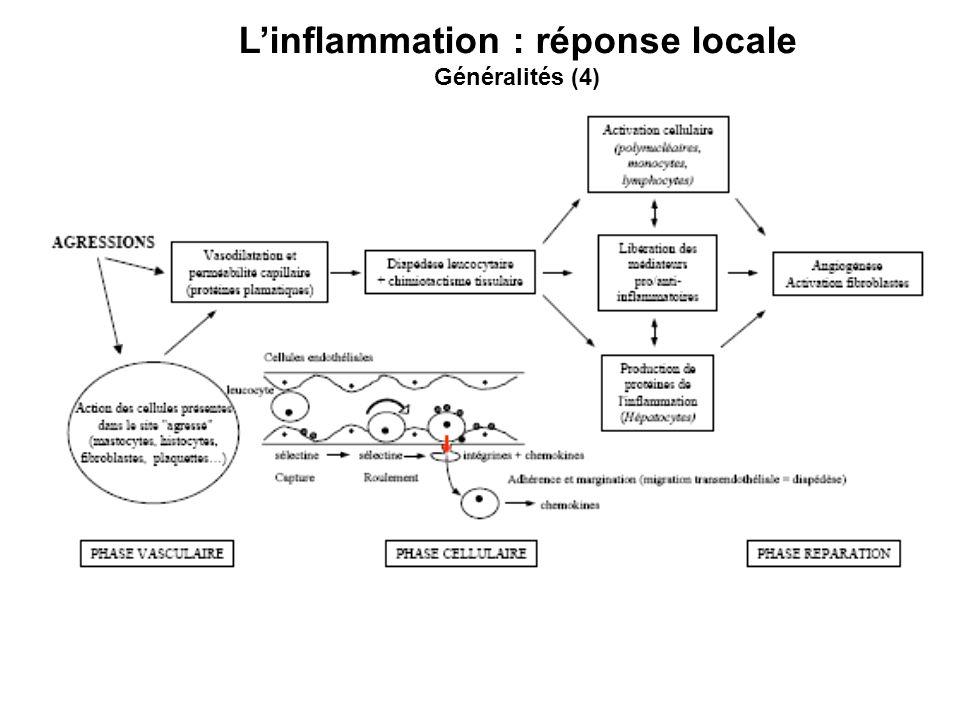 Linflammation : réponse locale Généralités (4)