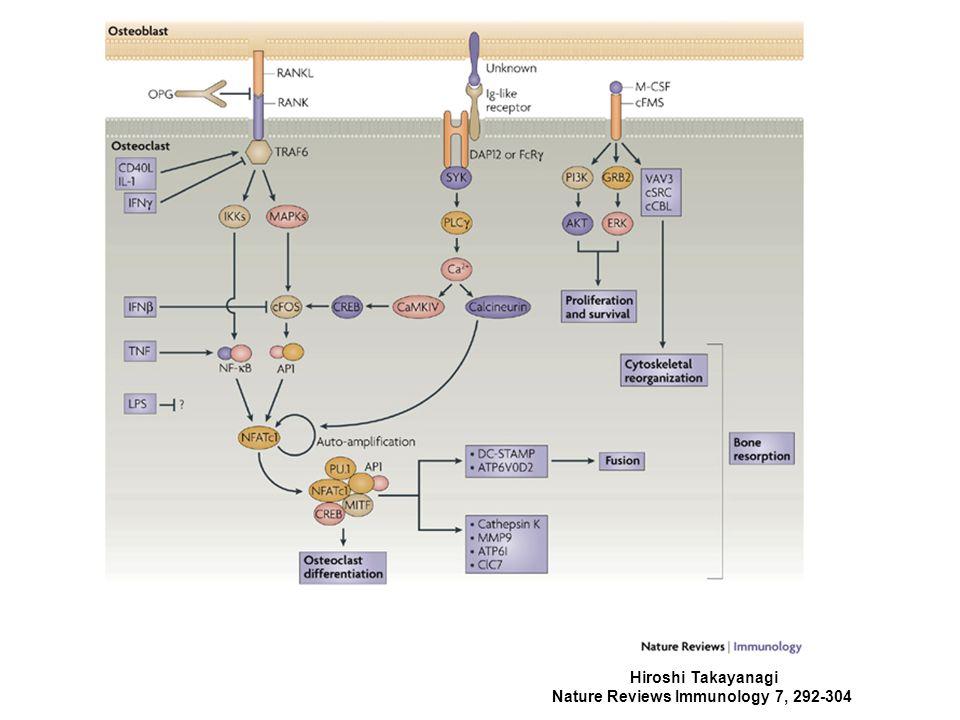 Hiroshi Takayanagi Nature Reviews Immunology 7, 292-304