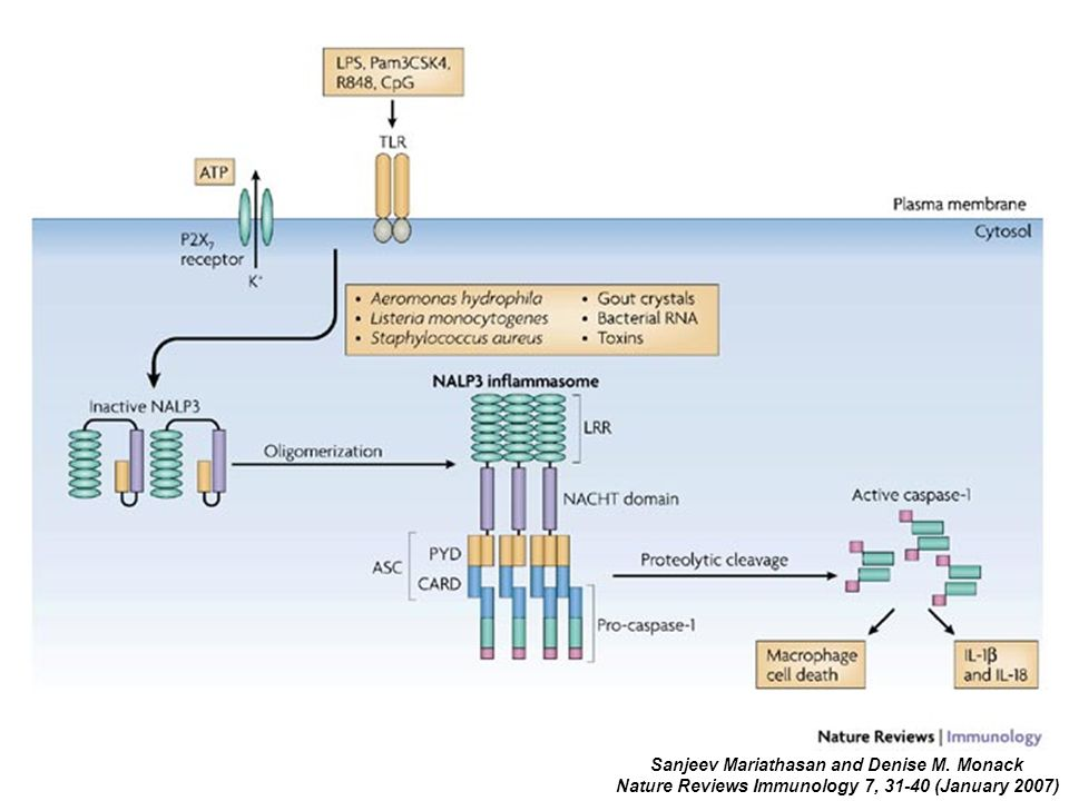 Sanjeev Mariathasan and Denise M. Monack Nature Reviews Immunology 7, 31-40 (January 2007)