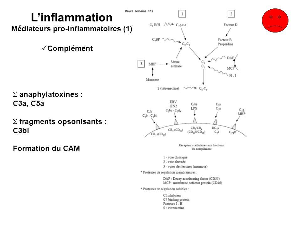 anaphylatoxines : C3a, C5a fragments opsonisants : C3bi Formation du CAM Complément Linflammation Médiateurs pro-inflammatoires (1)