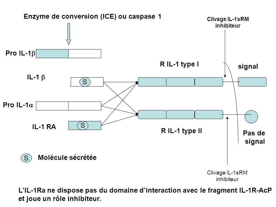 R IL-1 type I R IL-1 type II Enzyme de conversion (ICE) ou caspase 1 S S Pro IL-1 IL-1 IL-1 RA signal Pas de signal S Molécule sécrétée Clivage IL-1sR
