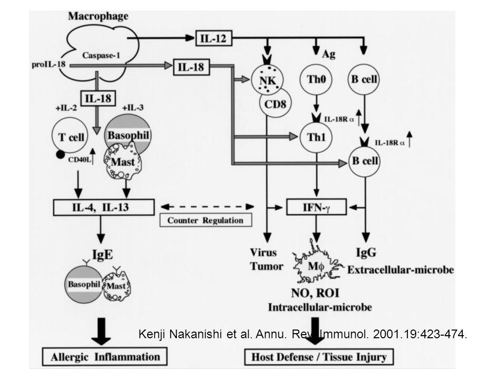 Kenji Nakanishi et al. Annu. Rev. Immunol. 2001.19:423-474.