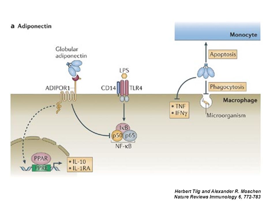 Herbert Tilg and Alexander R. Moschen Nature Reviews Immunology 6, 772-783