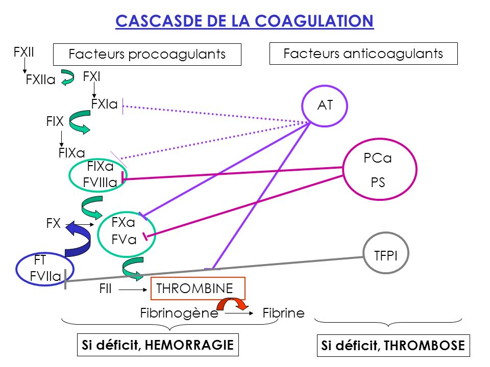 EXAMENS DE LABORATOIRE EXPLORANT LHEMOSTASE Exploration de lhémostase primaire : Test in vivo : le Temps de Saignement (TS) Exploration de la coagulation : Tests globaux : TP, TCA, Fg Tests spécifiques