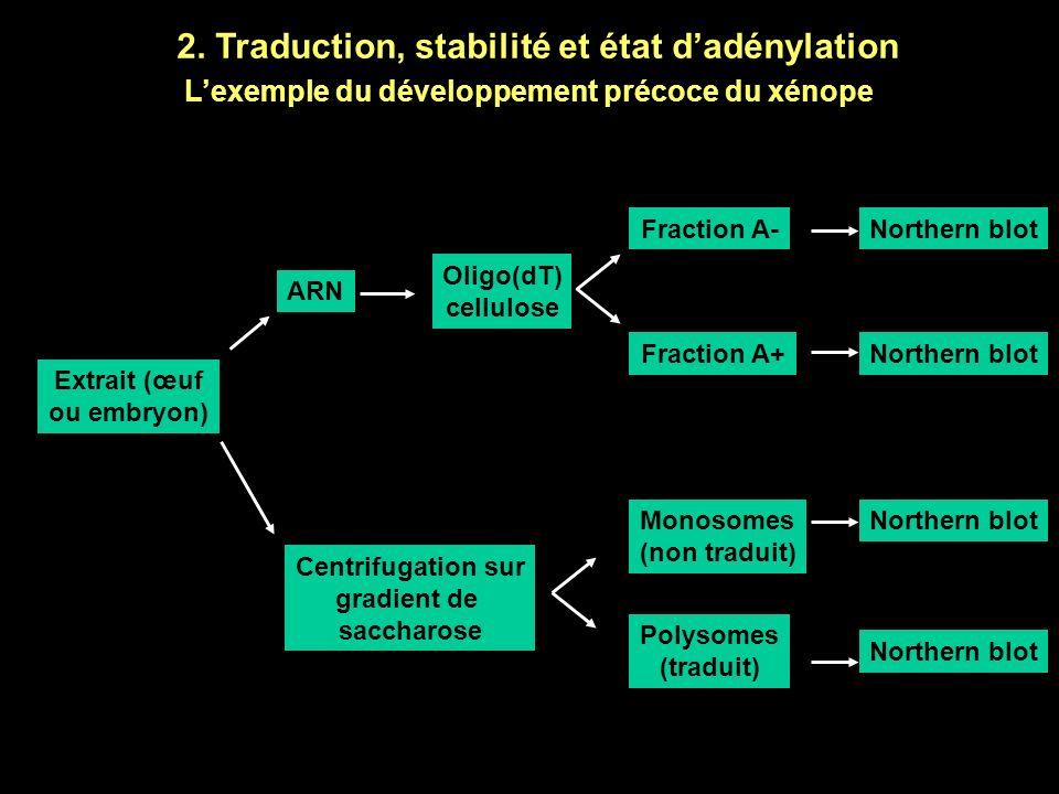 1. Epissages différentiels et développement Lexemple de la différenciation sexuelle chez la drosophile La protéine tra contrôle lépissage alternatif d