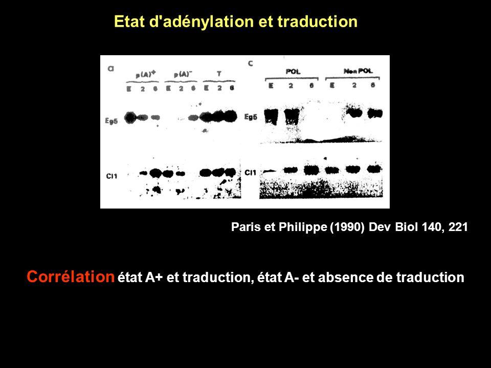 Northern blot 1.Electrophorèse des ARN Gel d agarose 2.