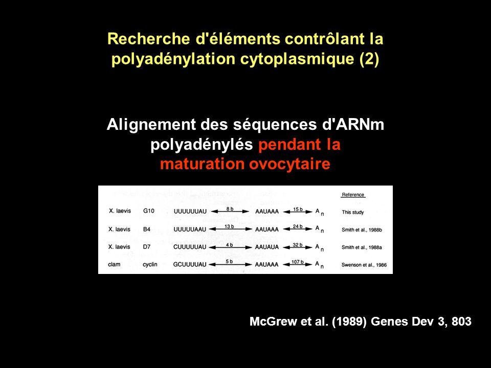 Recherche d éléments contrôlant la polyadénylation cytoplasmique (1) Certains ARNm sont polyadénylés pendant la maturation ovocytaire Mais quest-ce que la maturation ovocytaire.