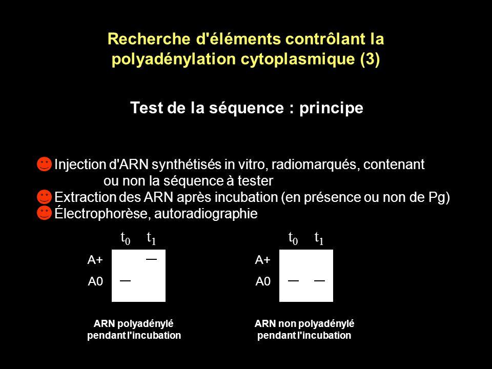 Recherche d éléments contrôlant la polyadénylation cytoplasmique (2) Alignement des séquences d ARNm polyadénylés pendant la maturation ovocytaire McGrew et al.