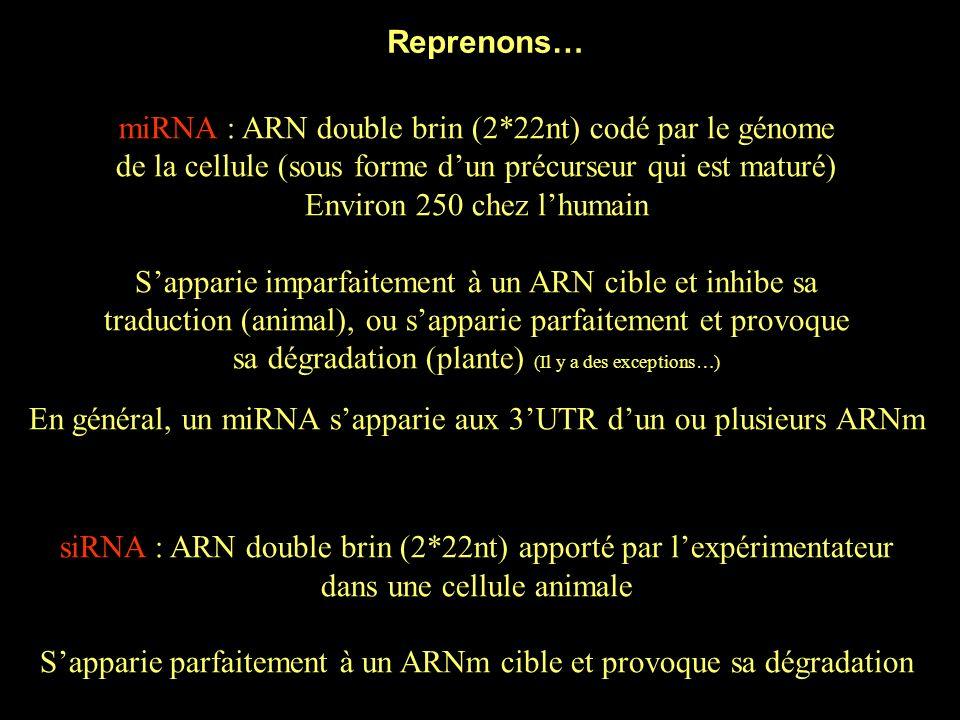 Fonction des miRNA LARN simple brin (22nt) shybride à un ARNm cible (« target »), et entraîne Argonaute sur cet ARN 2.
