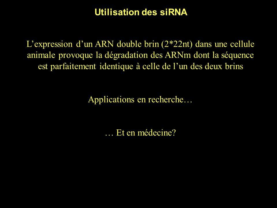 Reprenons… miRNA : ARN double brin (2*22nt) codé par le génome de la cellule (sous forme dun précurseur qui est maturé) Environ 250 chez lhumain Sapparie imparfaitement à un ARN cible et inhibe sa traduction (animal), ou sapparie parfaitement et provoque sa dégradation (plante) (Il y a des exceptions…) En général, un miRNA sapparie aux 3UTR dun ou plusieurs ARNm siRNA : ARN double brin (2*22nt) apporté par lexpérimentateur dans une cellule animale Sapparie parfaitement à un ARNm cible et provoque sa dégradation