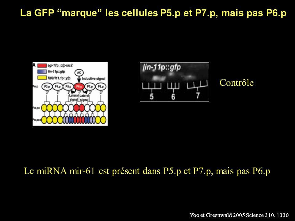 Les inductions dans la formation de la vulve Yoo et Greenwald 2005 Science 310, 1330 Première induction (voie EGF) Deuxième induction (voie Notch) « Marqueurs » de destinée cellulaire