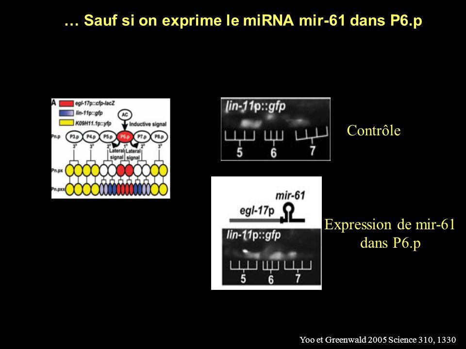 La GFP marque les cellules P5.p et P7.p, mais pas P6.p Yoo et Greenwald 2005 Science 310, 1330 Contrôle Le miRNA mir-61 est présent dans P5.p et P7.p, mais pas P6.p