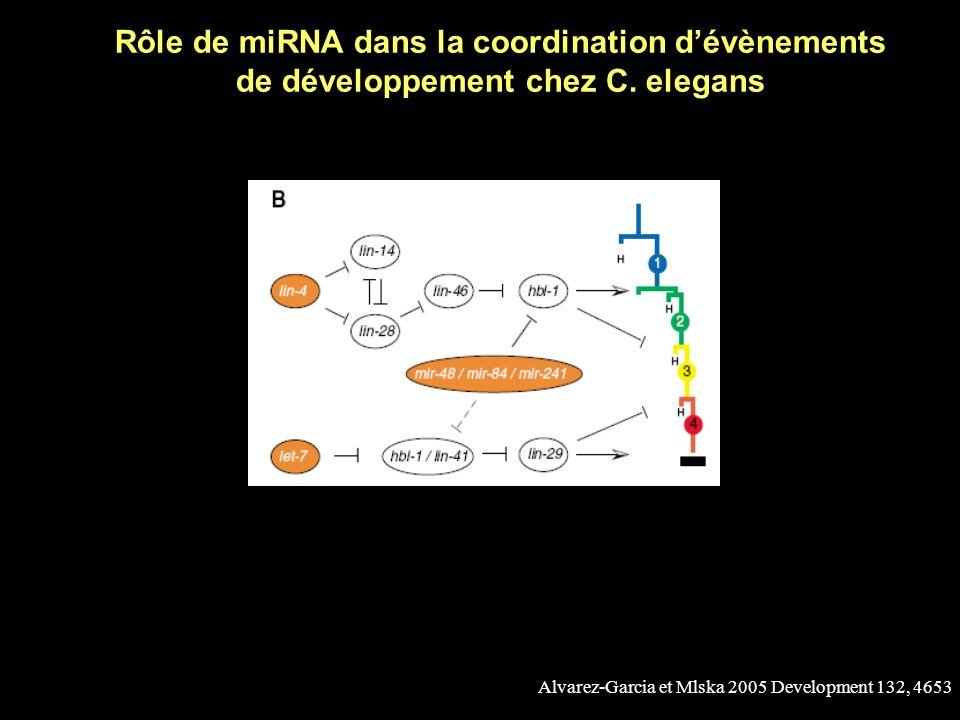 Alvarez-Garcia et Mlska 2005 Development 132, 4653 Les mutants hétérochrones chez C. elegans