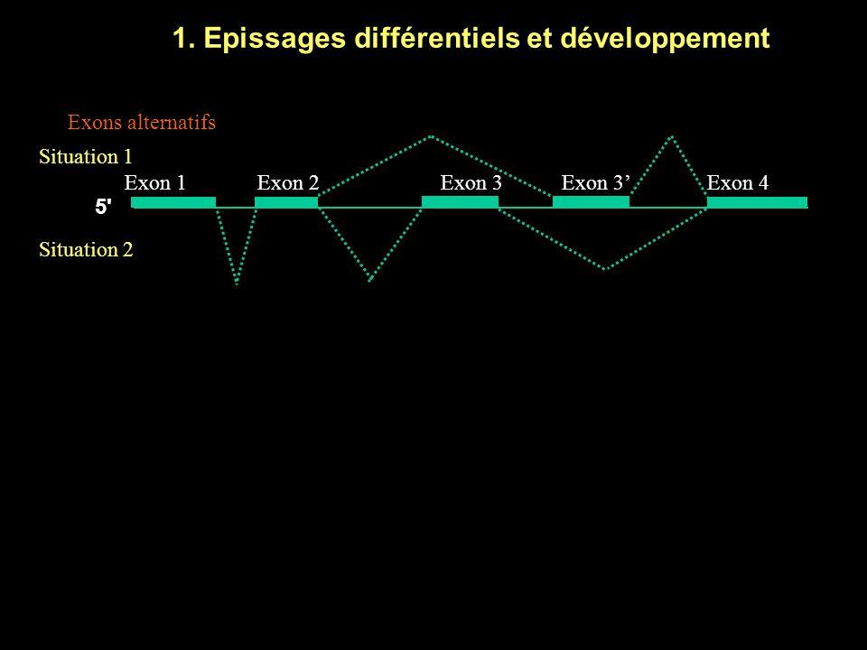 3.Contrôles post-transcriptionnels par les ARN non codants 1.