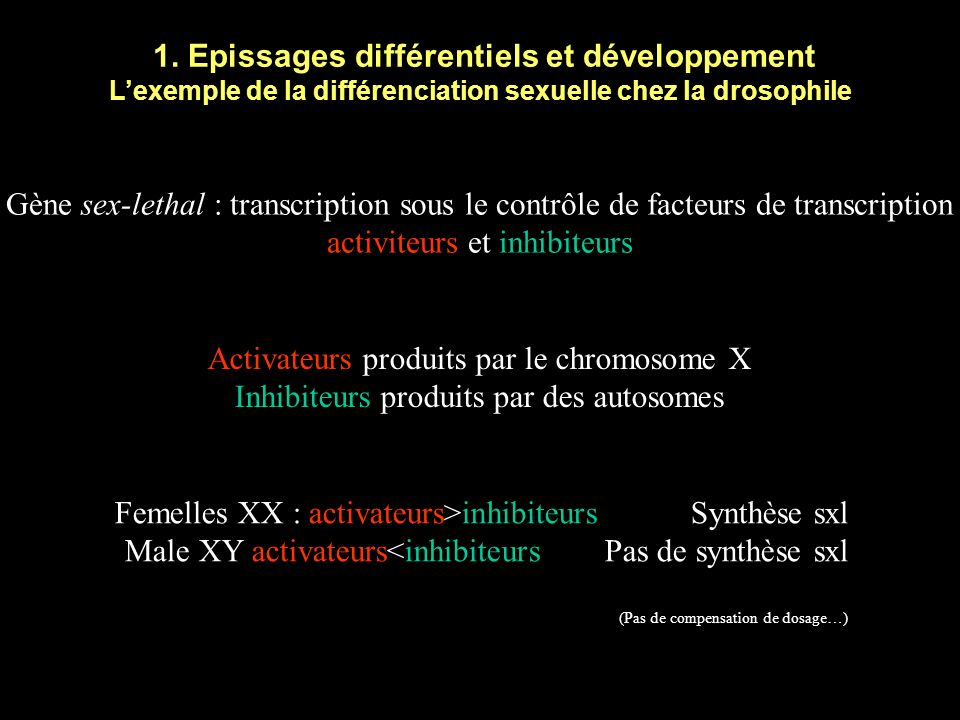 1. Epissages différentiels et développement Exon 1Exon 2Exon 3 5' Exon 3Exon 4 Exon 1Exon 2Exon 3 5' Exon 4 Saut dexon Et beaucoup dautres possibilité