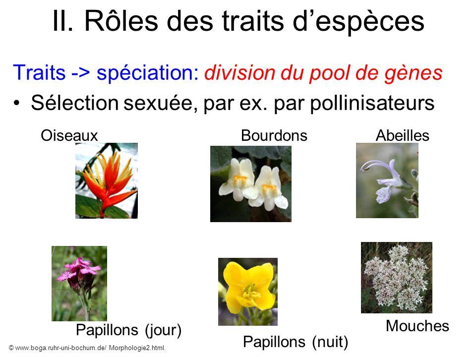 II. Rôles des traits despèces Traits -> spéciation: division du pool de gènes Sélection sexuée, par ex. par pollinisateurs © www.boga.ruhr-uni-bochum.