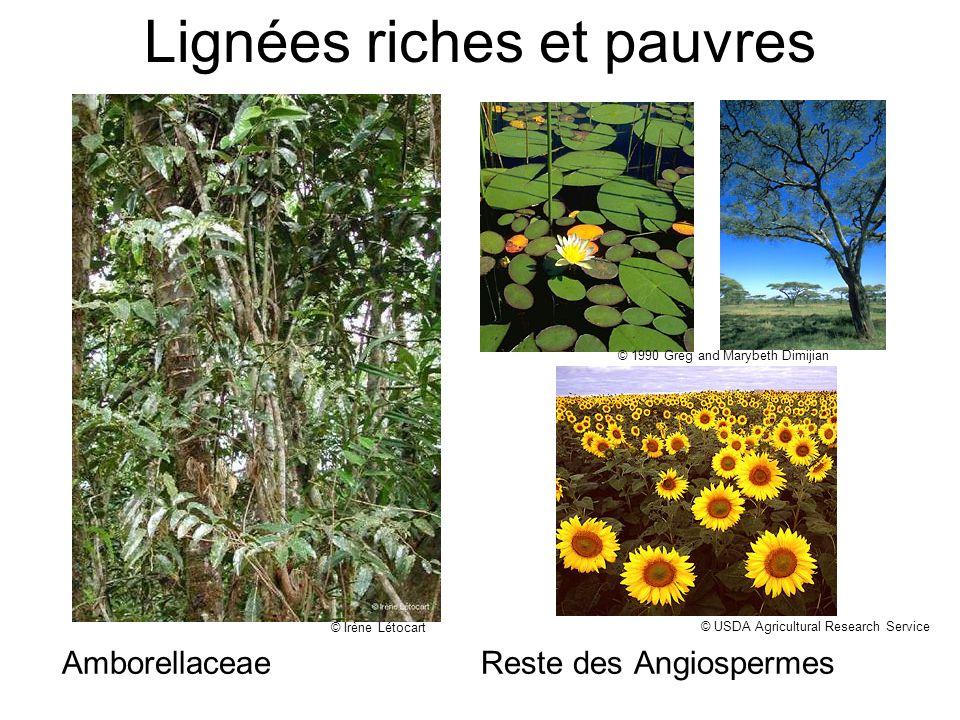 © http://www.hort.purdue.edu/rhodcv/hort410/genint/fl004.jpg Espèce pollinisée principalement par insectes: Peu déchange génétique au delà de quelques mètres