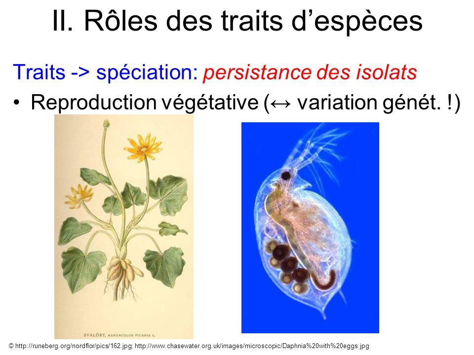 II. Rôles des traits despèces Traits -> spéciation: persistance des isolats Reproduction végétative ( variation génét. !) © http://runeberg.org/nordfl