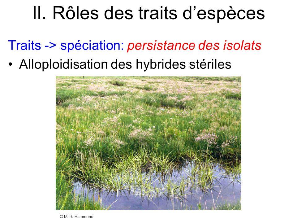 II. Rôles des traits despèces Traits -> spéciation: persistance des isolats Alloploidisation des hybrides stériles © Mark Hammond