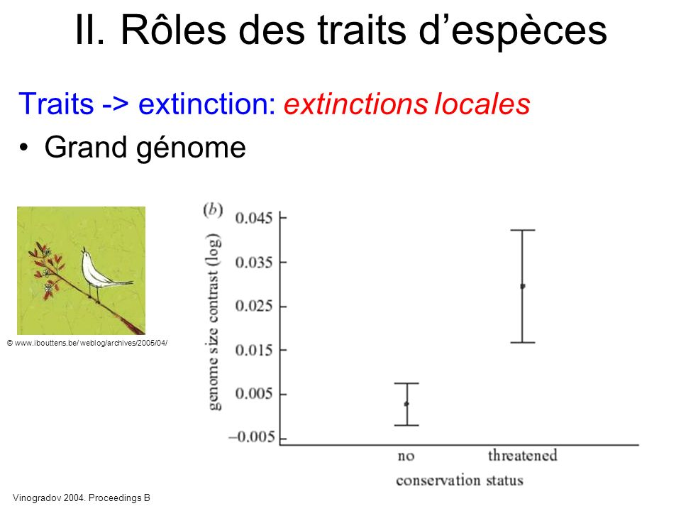 II. Rôles des traits despèces Traits -> extinction: extinctions locales Grand génome Vinogradov 2004. Proceedings B © www.ibouttens.be/ weblog/archive