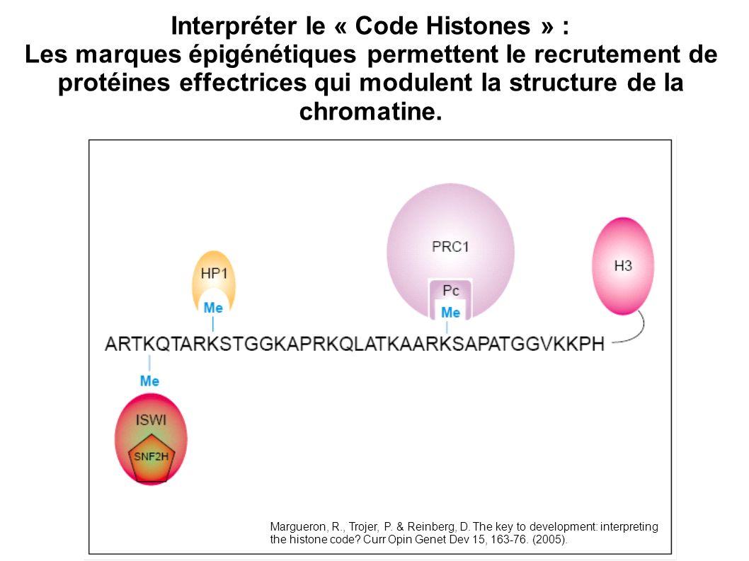 Interpréter le « Code Histones » : Les marques épigénétiques permettent le recrutement de protéines effectrices qui modulent la structure de la chroma