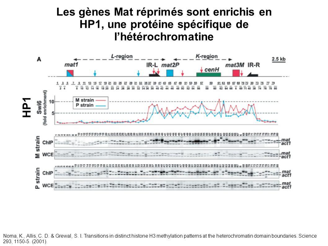 HP1 Les gènes Mat réprimés sont enrichis en HP1, une protéine spécifique de lhétérochromatine Noma, K., Allis, C. D. & Grewal, S. I. Transitions in di