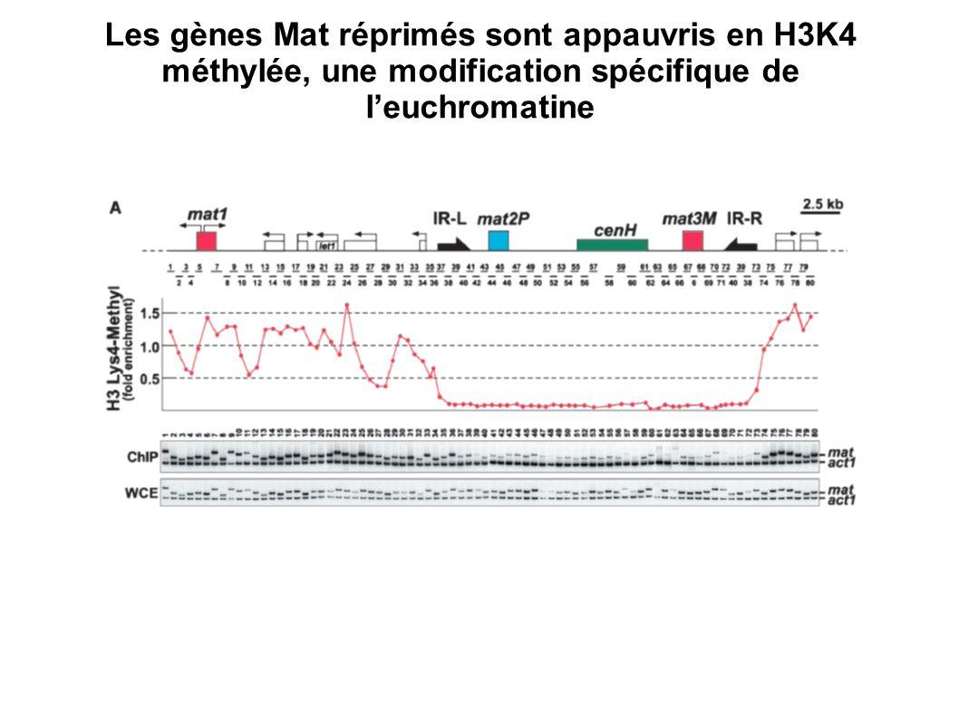Les gènes Mat réprimés sont appauvris en H3K4 méthylée, une modification spécifique de leuchromatine